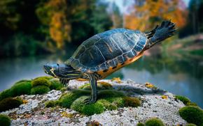 dance, stone, turtle, moss