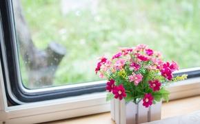 Flowers, pink, window, flowerpot, windowsill