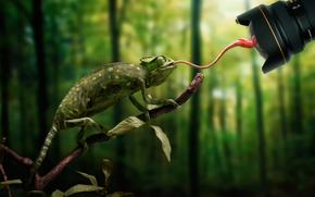 хамелеон, язык, муха, промах, объектив
