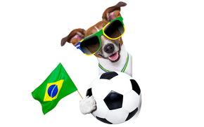 cane, occhiali