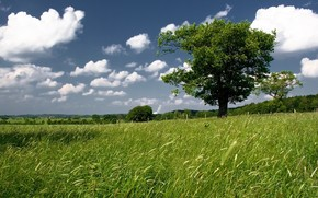 sky, field, tree, greens