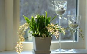 Flores, ORQUÍDEAS, janela, potes, janela, castiçais