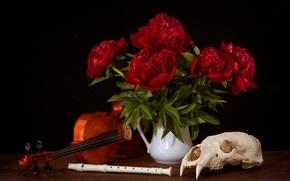 Peonie, cranio, violino, canna