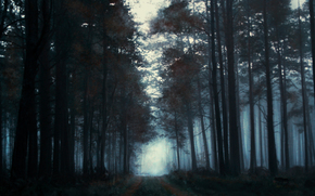 fog, morning, forest, painted landscape, trees