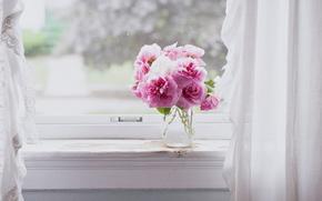 розовый, цветы, натюрморт, окна, розовые цветы
