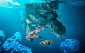 małe ryby, hipopotam, Poławiany