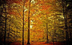 foresta, alberi, natura, autunno