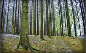 Wald, Bäume, Straße, Natur