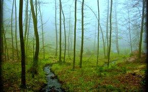 foresta, torrente, alberi, nebbia, natura