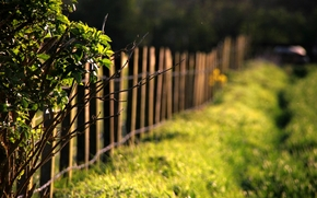 Day, background, fence, wallpaper, tree, leaves, Widescreen, nature, Widescreen, BRANCH, fullscreen, degradation, Macro, grass, leaves, greens, fencing, sun, fence, meadow, foliage, trees