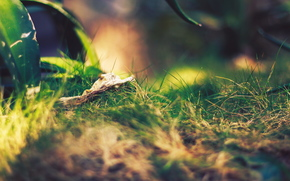 зелень, макро, трава