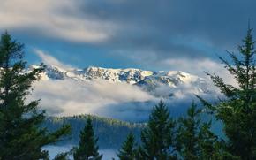 горы, облака, ели, штат Вашингтон, Национальный парк Олимпик, хребет Олимпик