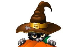 когти, тыква, вектор, ушки, черный кот, взгляд, шляпа, праздник
