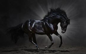 грива, животное, лошадь, конь