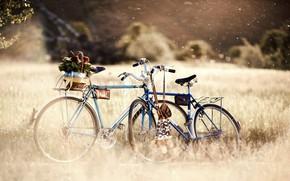 bike, plants, Mood, bokeh, Wheel, Flowers, wallpaper, Day, grass, nature, greens, basket, Bikes, great, degradation, flowers, background, fullscreen, Widescreen, trees, miscellanea, Widescreen