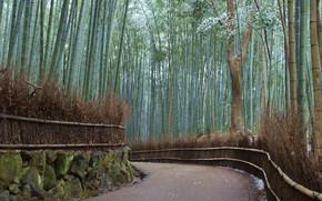 Winter, Bambus, Schnee, Wald, Straße