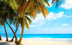 Brzeg, piasek, Palms, plaża, morze, tropikach