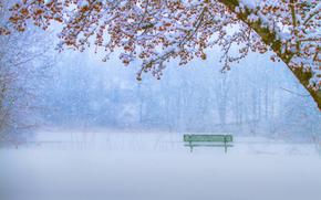 trees, winter, park, snowfall, bench, snow