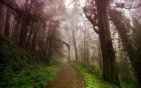горы, дорога, природа, туман