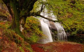 autunno, FLOW, foresta, cascata, Rocce