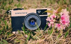 Mood, greens, Widescreen, grass, background, wallpaper, Flowers, camera, Widescreen, camera, florets. Pink, fullscreen