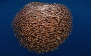 Mundial de Actividades Subacuáticas, empacar, jamba, mar, pescado