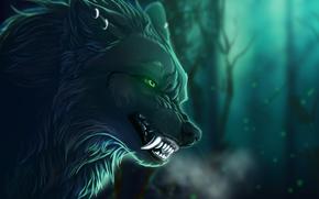 caninos, fondo, RAMA, ver, lobo, fauces, Arte, animal