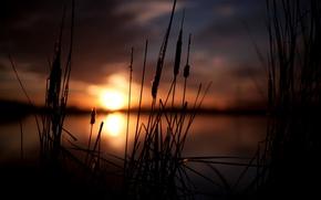 Macro, natura, cielo, Widescreen, degradazione, sfondo, impianto, sole, Widescreen, spighe di grano, carta da parati, Spighette, fullscreen, tramonto, bokeh