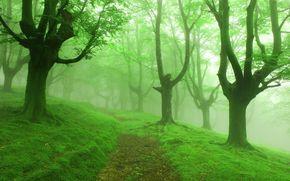 trees, fog, road, nature