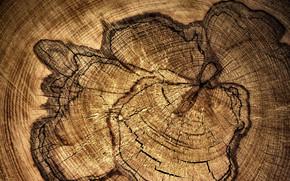 albero, STRUTTURA, modello