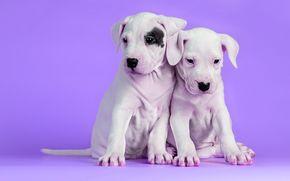 щенки, фон, собаки