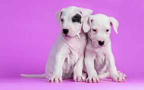 小狗, 背景, 狗