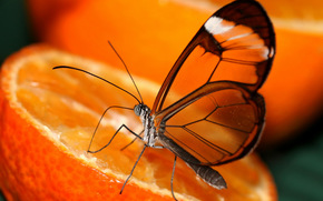 butterfly, wings, orange, transparency, orange