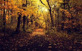 alberi, autunno, asfalto, FILIALE, parco, stradale, natura, fogliame, giallo