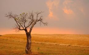 trigo, renacimiento, campo, árbol