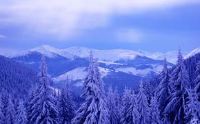 cielo, inverno, Montagne, nevicata, paesaggio, abete rosso, nuvole, alberi