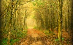 森林, 树, 道路, 性质