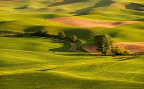Colline, campo, erba, stradale, tramonto, alberi