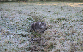 Grey, pathway. cat, Freezing, frost, grass