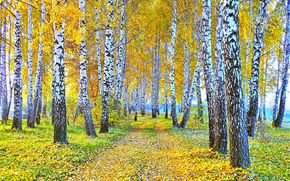 autunno, alberi, stradale, natura