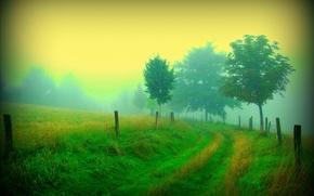 carretera, árboles, niebla, naturaleza