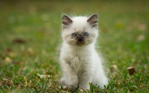 kitten, Gras