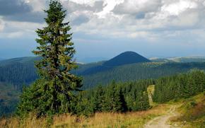 abete rosso, alberi, stradale, nuvole, foresta, cielo, Montagne, Colline