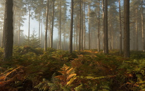 forest, trees, Thicket, light, foliage, nature