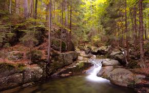 fiume, foresta, torrente