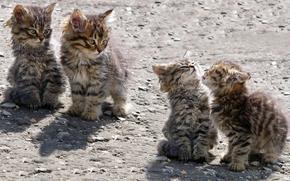 Kittens, homeless, play
