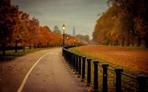park, drzew, droga, charakter, jesień, listowie