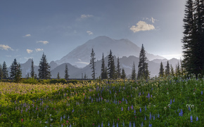 glade, Flowers, Mountains, landscape, nature, forest
