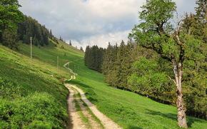 пейзаж, трава, дорога, природа, Швейцария