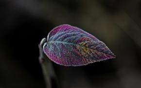 лист, цветной